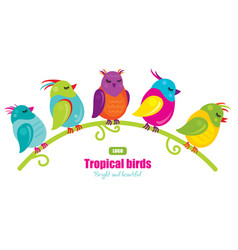 five tropical birds sitting on a branch vector image