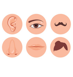 human nose ear mouth mustache hair and eye set vector image