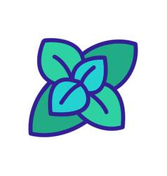 Inflorescence fragrant oregano icon vector