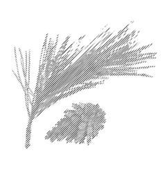 Pine branch or twig vector