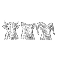 Farm animals icon set Pig cow and goat heads vector image