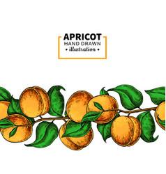 apricot branch seamless border hand drawn vector image