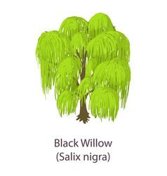 Black willow icon isometric style vector