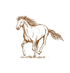 Brown horse sketch of arabian mare vector image