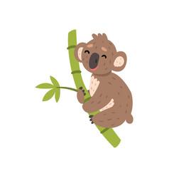 Cute koala bear climbing tree branch australian vector