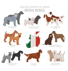 Dogs country origin irish dog breeds vector