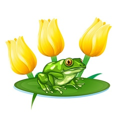 Green frog on water lily vector image