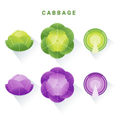 set fresh green and red cabbages vector image