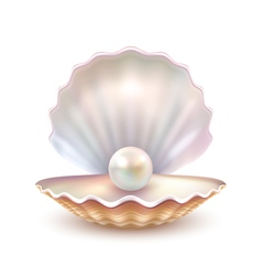 Pearl Shell Realistic Close Up Image vector image vector image