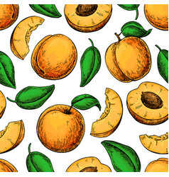 apricot seamless pattern drawing hand vector image