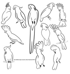 Cockatoos vector
