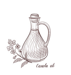 drawing canola oil vector image