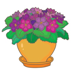 African violets vector