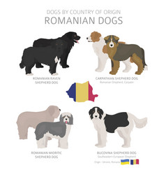 Dogs country origin romanian dog breeds vector