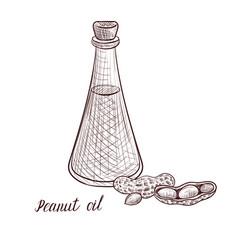 Drawing peanut oil vector