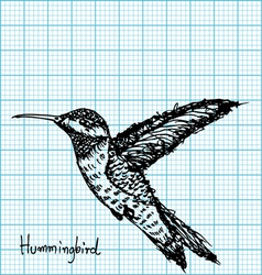 hummingbird sketch on graph paper vector image