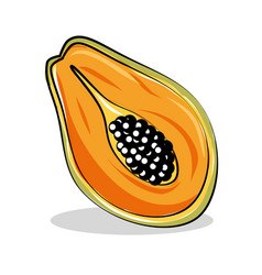 Papaya fresh and healthy fruit vector