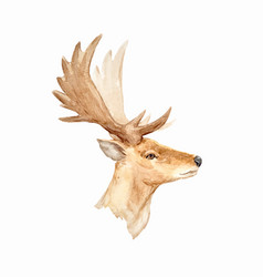 Watercolor deer portrait vector