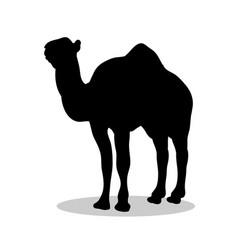 camel mammal black silhouette animal vector image