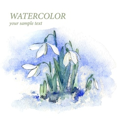 First spring flowers snowdrops in snow vector image vector image