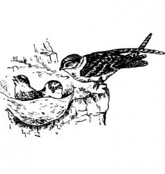 Bird collocalia vector