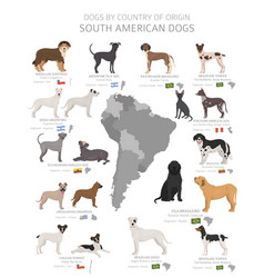 Dogs country origin south american vector