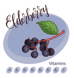 Fruit element of elderberry hand drawn vector