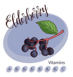 fruit element of elderberry hand drawn vector image