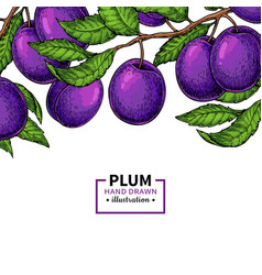 Plum branch border hand drawn isolated fruit vector