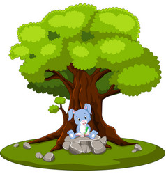 rabbit reading book and sitting on the stone vector image