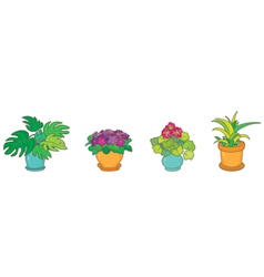Room plants vector image