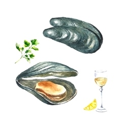 Watercolor mussels vector image