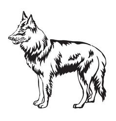 Decorative standing portrait of belgian shepherd vector