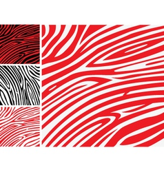 red and white zebra skin vector image