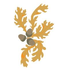 autumn oak vector image