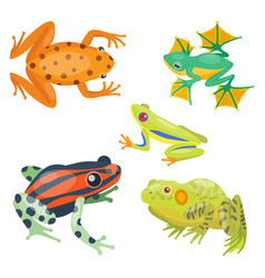 frog cartoon tropical animal cartoon nature icon vector image vector image