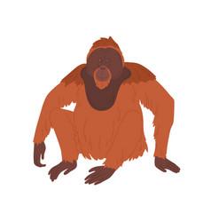 bornean orangutan or large brown hairy ape vector image
