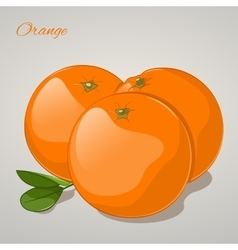 Cartoon sweet orange on grey background vector image