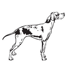 Decorative standing portrait of pointer vector