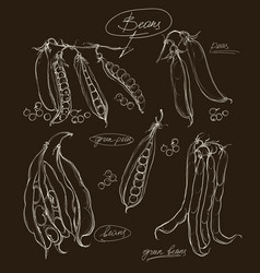 Hand drawing legumes on a black backgroun vector