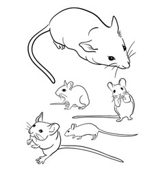 mice line art 01 vector image