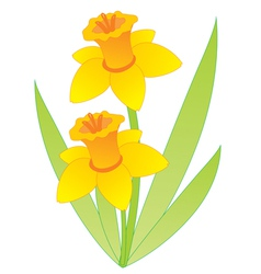 Narcissus vector