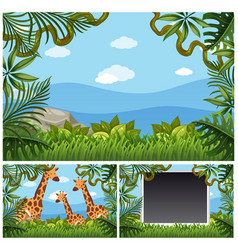 Background template with giraffes in forest vector