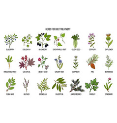 Collection of natural herbs for gout treatment vector