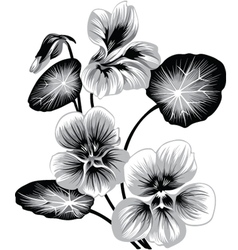 Flower of nasturtium vector image