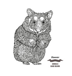 Hand drawn hamster black ink sketch animal on vector