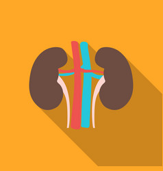 Kidney icon in flat style isolated on white vector