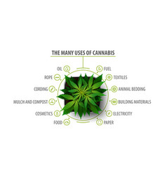 Many uses cannabis white poster vector