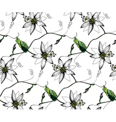 Passiflora white pattern vector image vector image