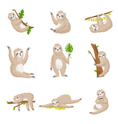 set of cute sloths in different poses and various vector image